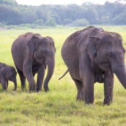 10 day Sri Lanka itinerary Kaudulla National Park