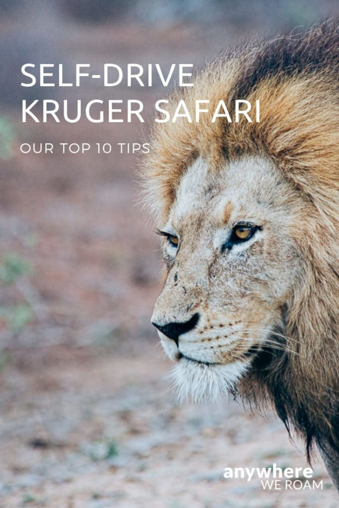 Our top 10 tips for the perfect self-drive Kruger safari. / Kruger Safari South Africa / Kruger National Park / #kruger #southafrica