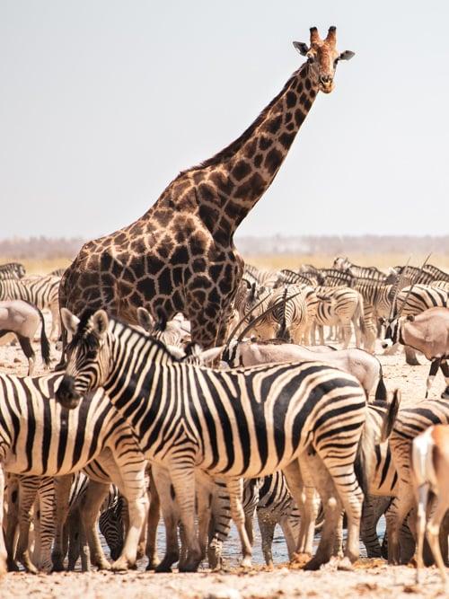 Etosha National Park, Self Drive, Namibia