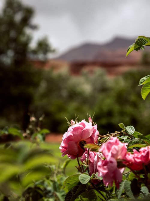 Valley of the Roses, Morocco.