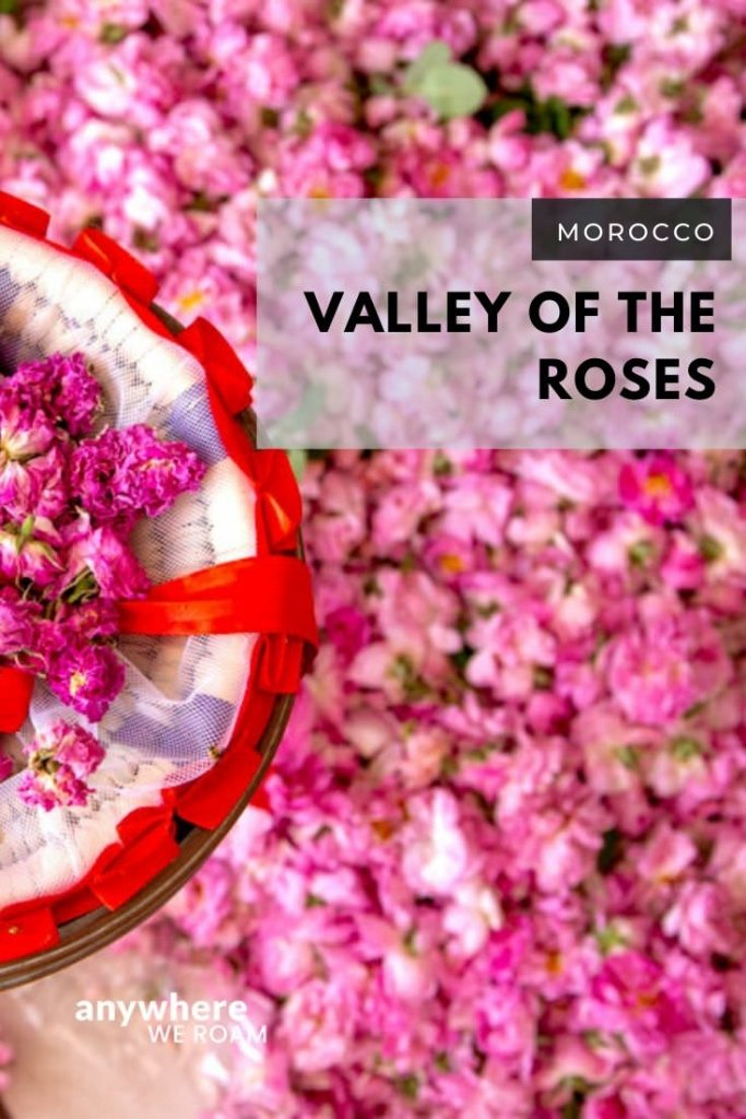 The Valley of the Roses in Morocco is often overlooked on the popular Ouarzazate to Dades road trip route. Not only is the scenery stunning; the local rose products are the lifeblood of a small Moroccan community. What to do and where to stay in the Valley of the Roses. / #morocco #rosevalley #roses #moroccotravel
