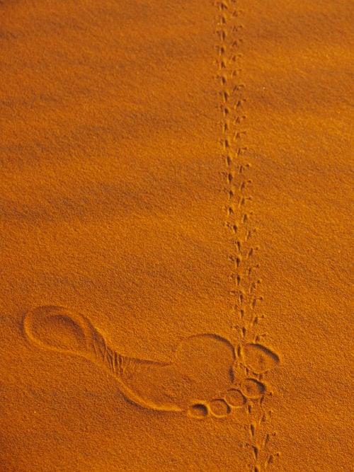 Morocco Itinerary 10 Days, Merzouga